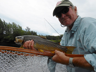 Beautiful brown trout on the Upper Connecticut River.
